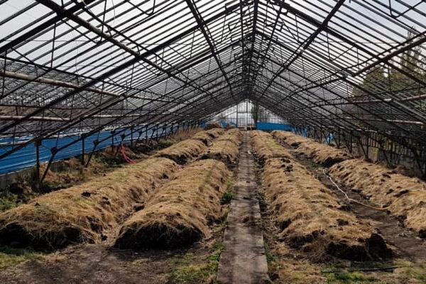 Производство биогумуса на селе