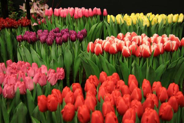 Цветочный бизнес в деревне