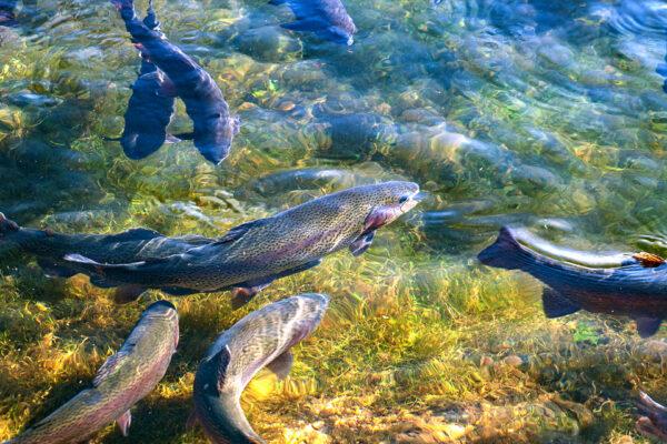Деревенский бизнес - рыбоводство